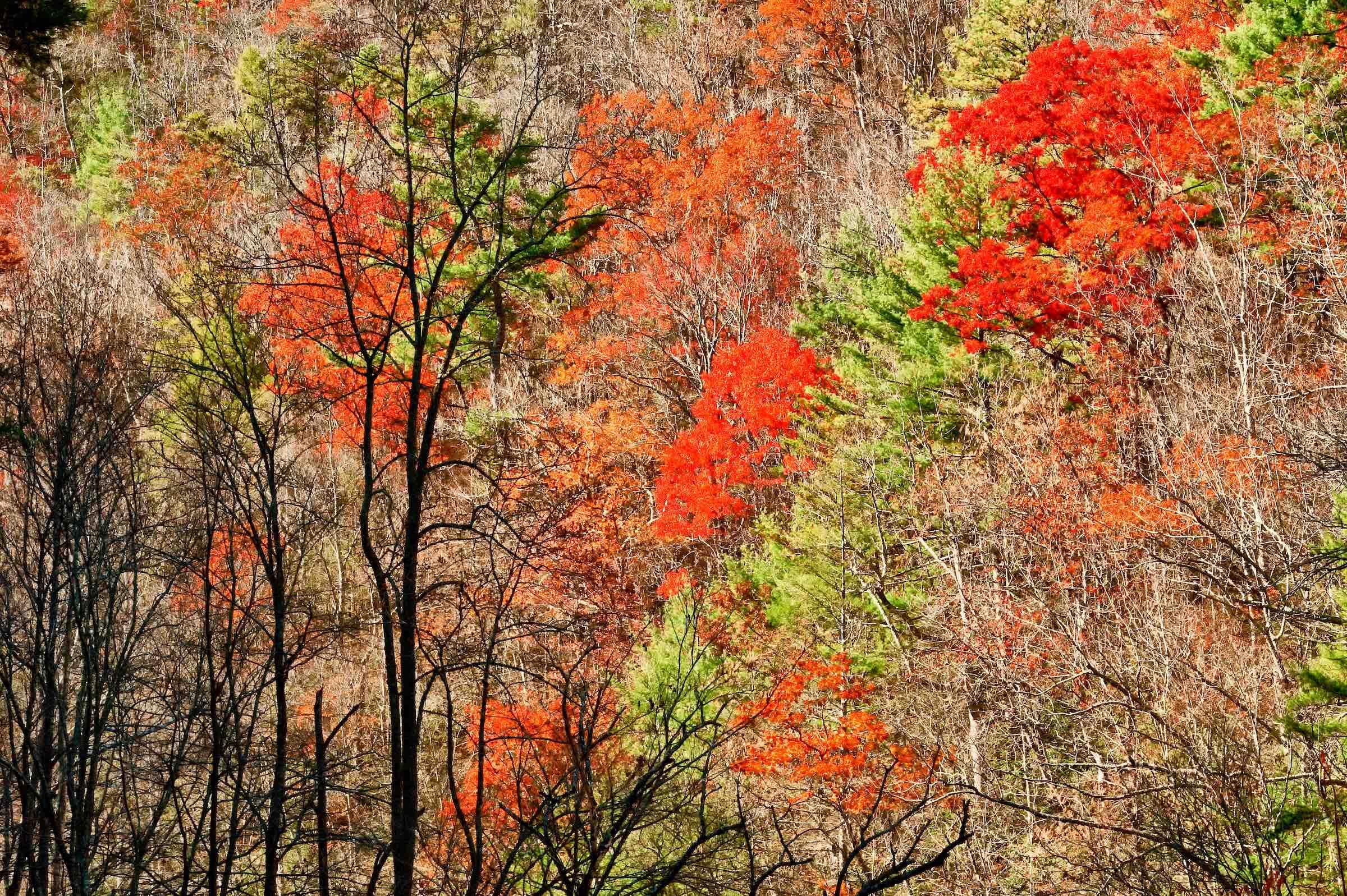Autumn hardwood forest, great smoky mountains np