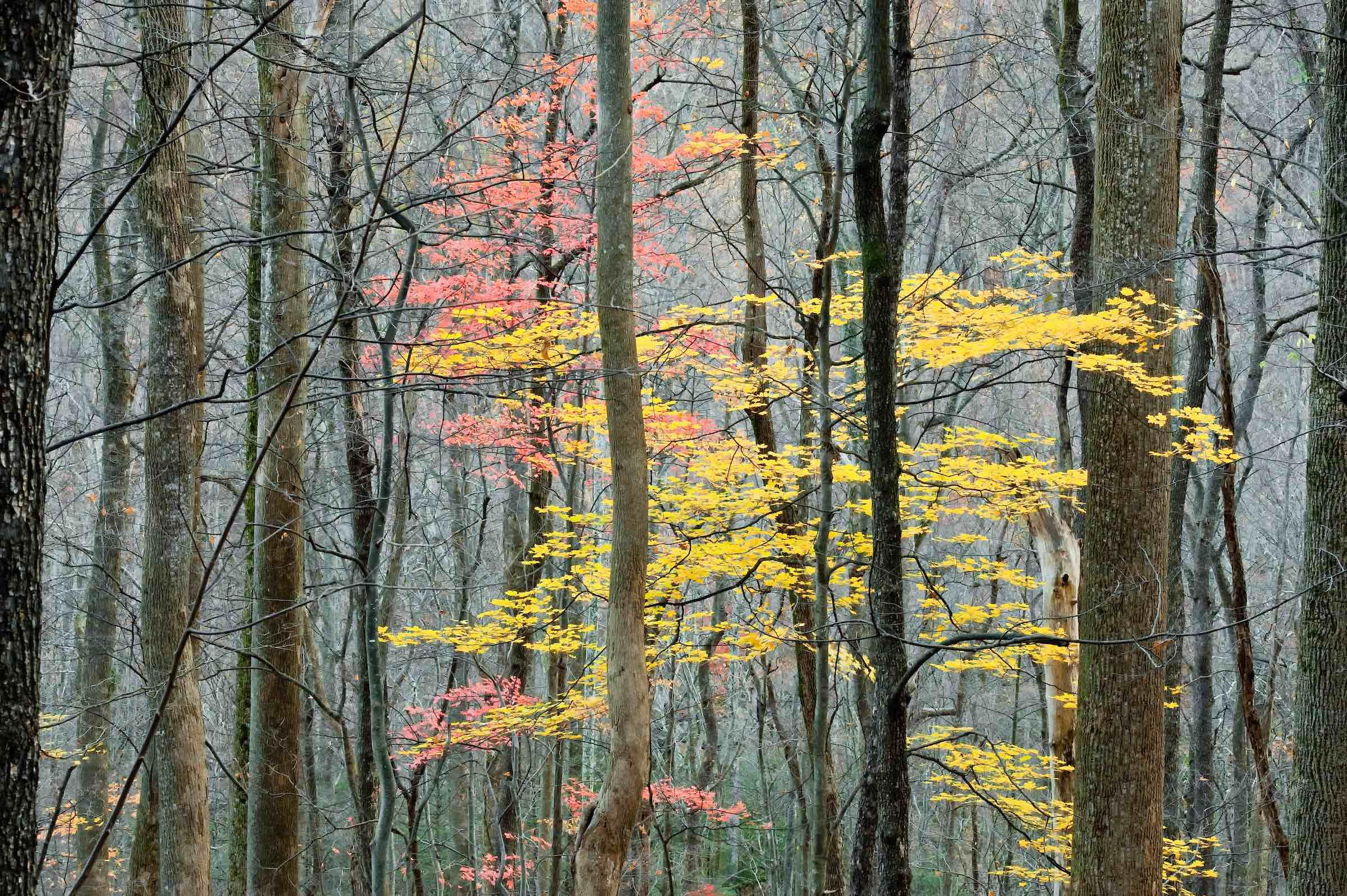 AutumnHardwoodForestsmokymt.NP K16-12M.jpg