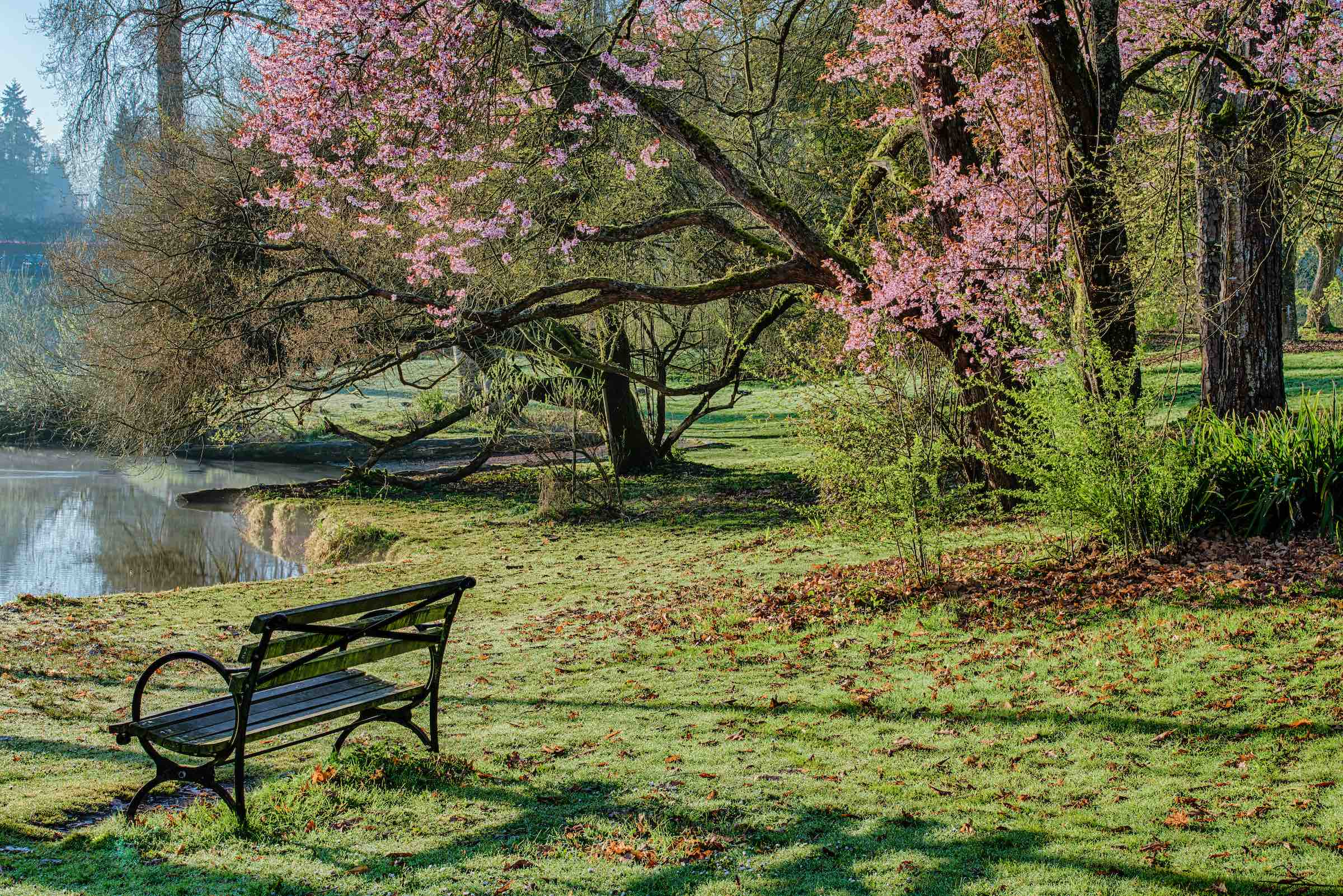 Washington Park Arboretum P34-11_HDRPS.jpg