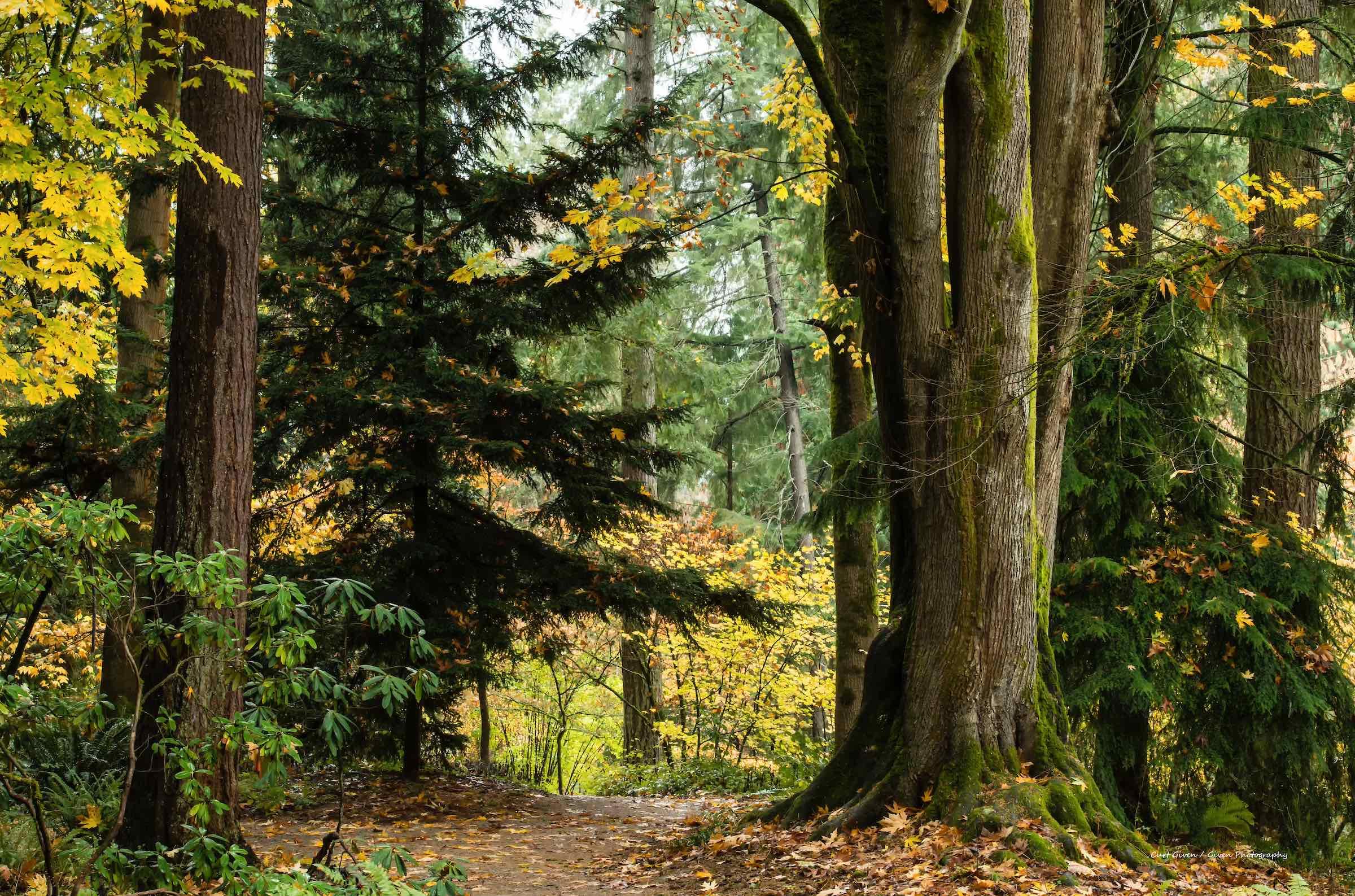 Washington park arboretum, seattle. © given photography 2018