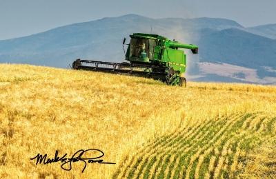 Barley Harvest Sunup Cropped.jpg