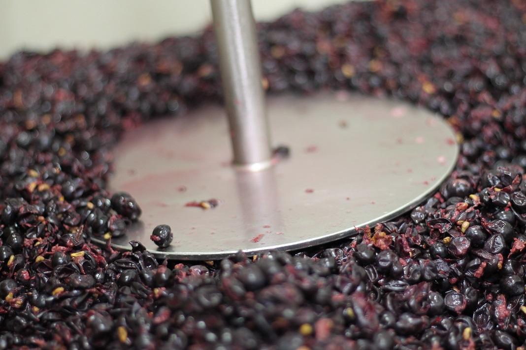 Punching down Waits-Mast Pinot Noir grapes from Mariah Vineyard in October, 2018. Photo: Waits-Mast