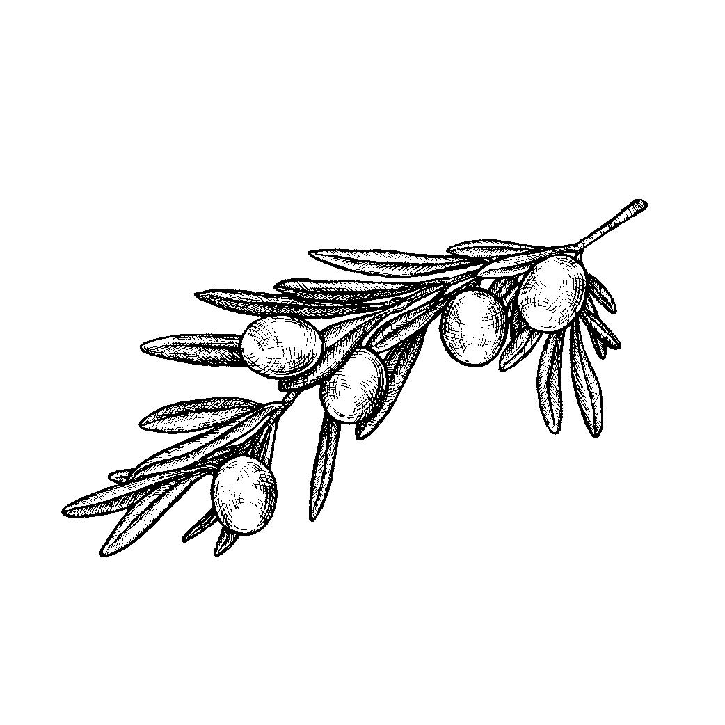 olivebranch1-01.jpg