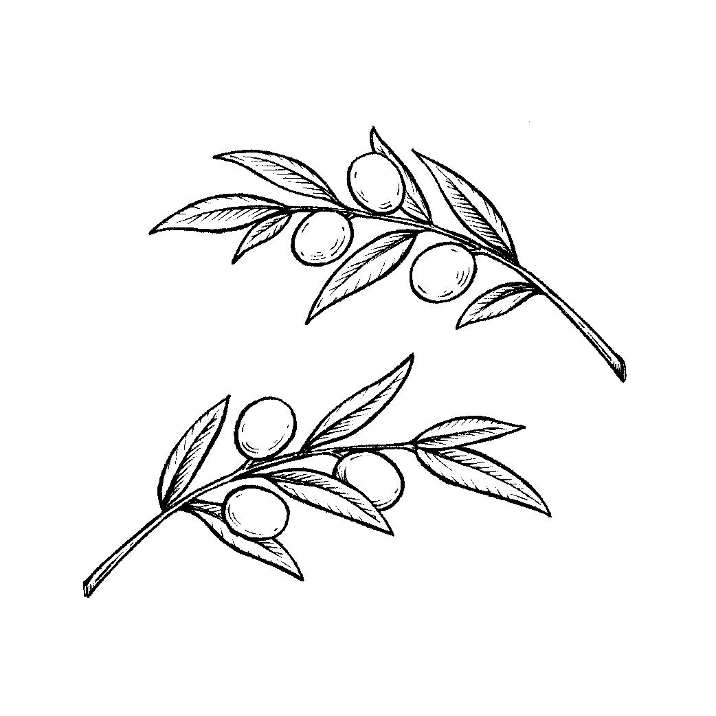 olivebranch2-01-01.jpg