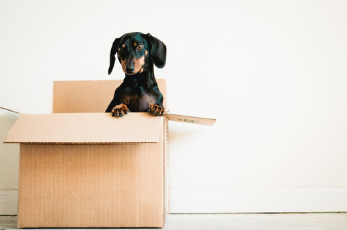 Are Millennials Buying Homes For Their Dogs?