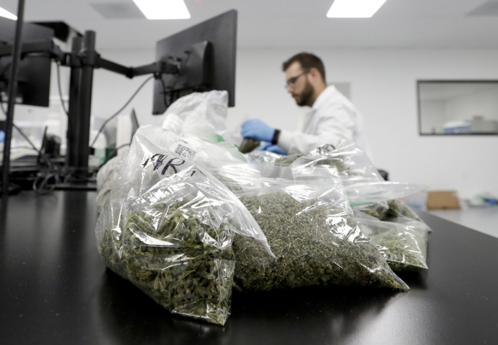Marijuana samples await testing at Cannalysis, a testing laboratory in Santa Ana, Calif. Cannalysis has found mold on some cannabis products but the sample still passed current state tests, leading the company to urge regulators at a state hearing last month to add a new test that company officials say can detect a large number of potentially harmful species of mold and yeast not currently covered in state guidelines. Associated Press/Chris Carlson