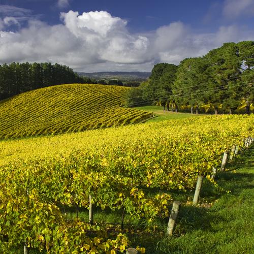 Penfolds' Adelaide Hills Vineyard