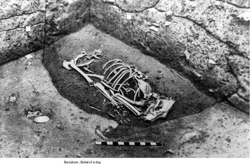 A Dog burial pit