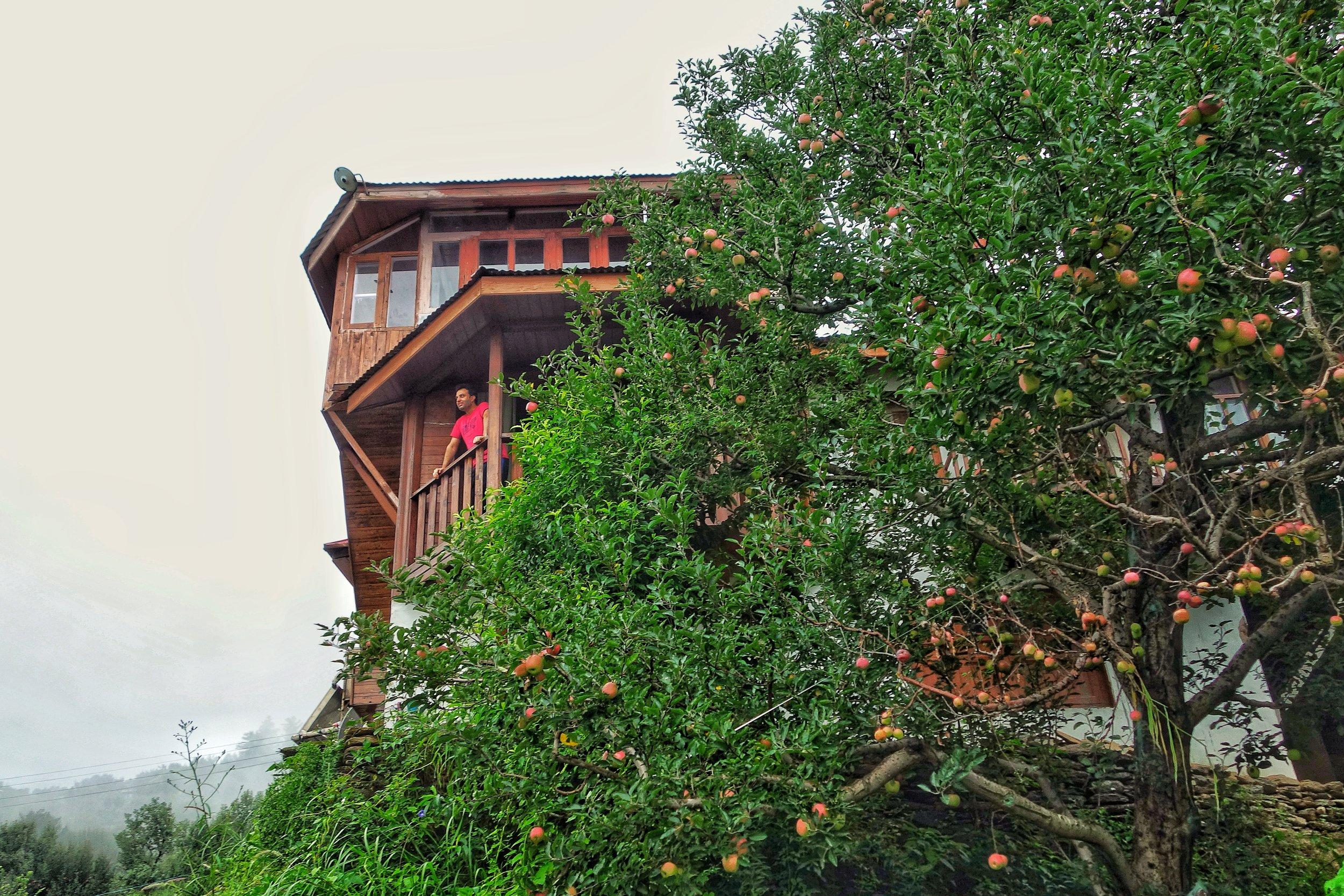 Kotkhai Kotgarh Apple Country -