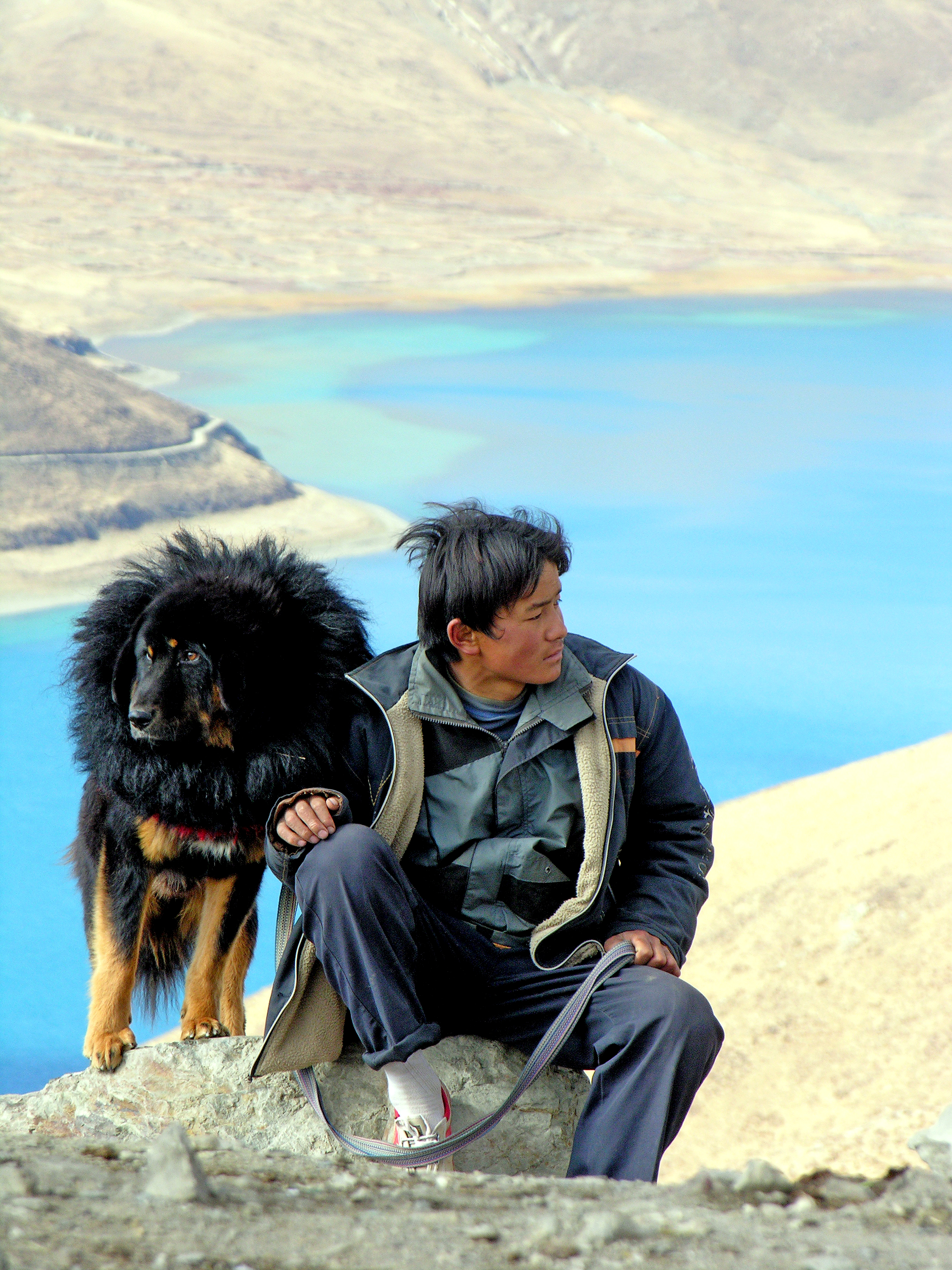 A Tibetan Mastiff in Tibet (Pic from Wikipedia)