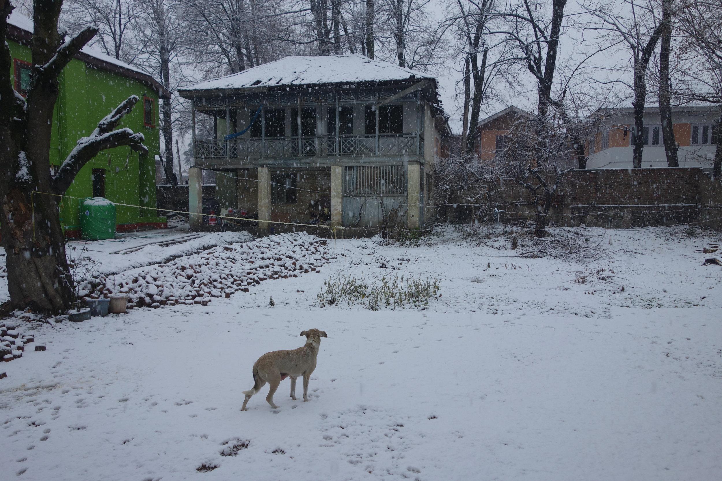 whiteys-srinagar-snowfall