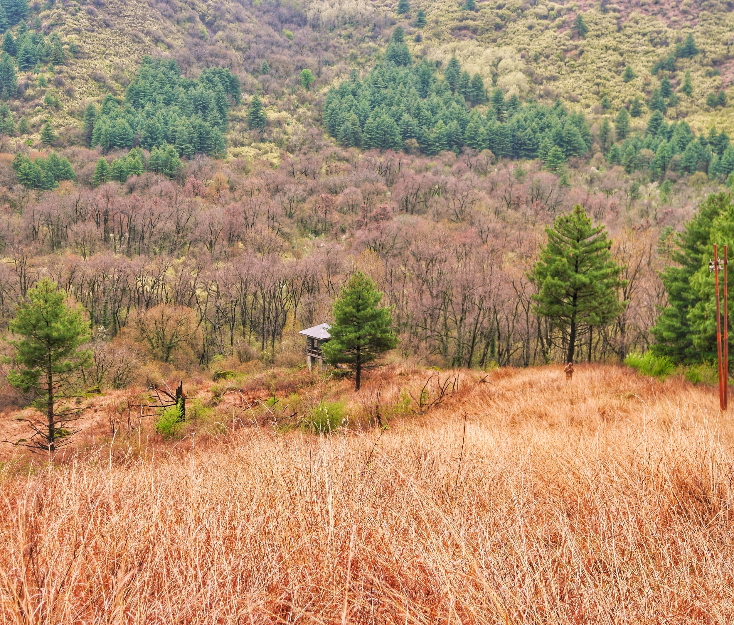 The Rangers lookout hut at the Dachigam National Park