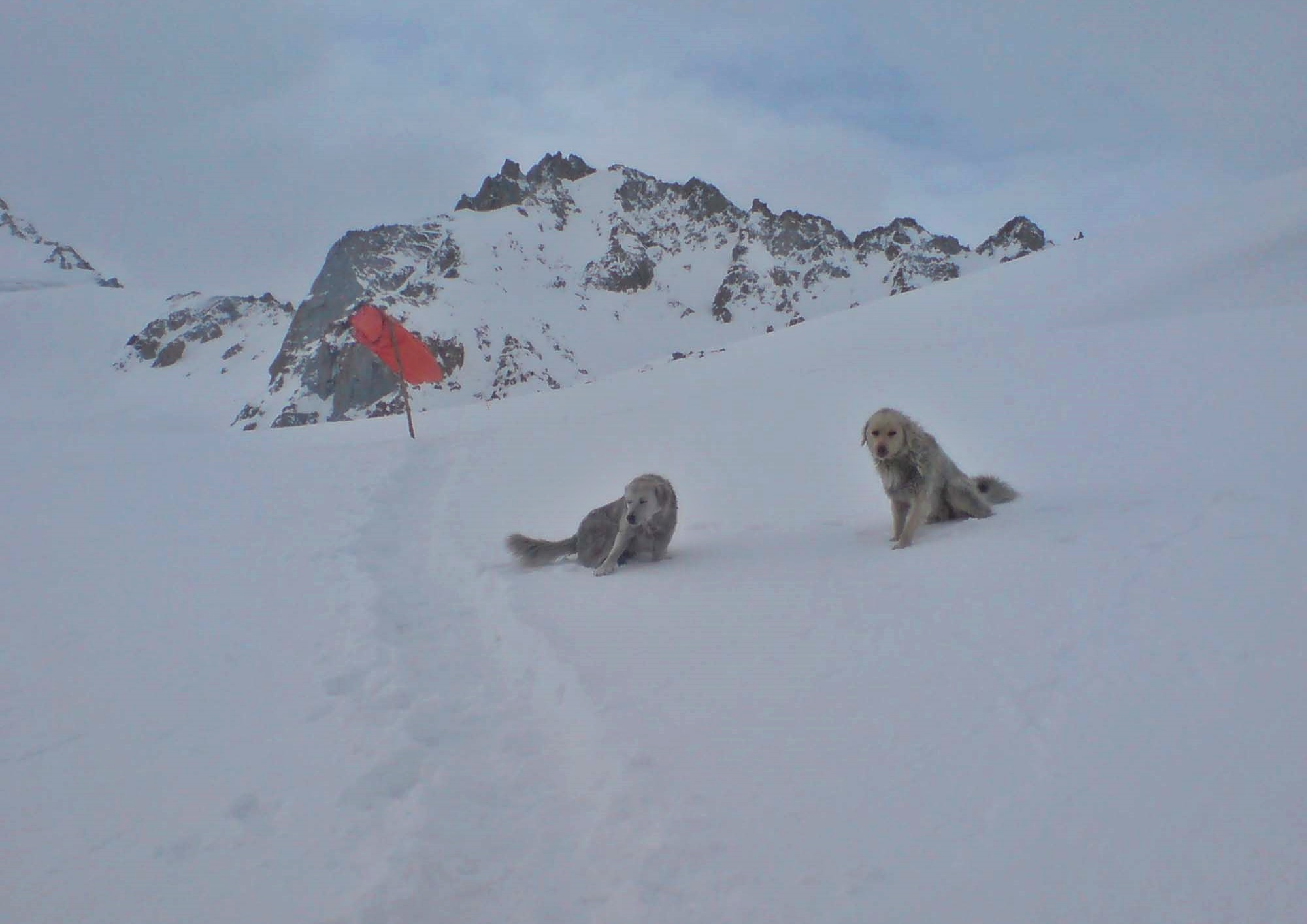Dogs somewhere on the Siachen Glacier (Courtesy Wikipedia)