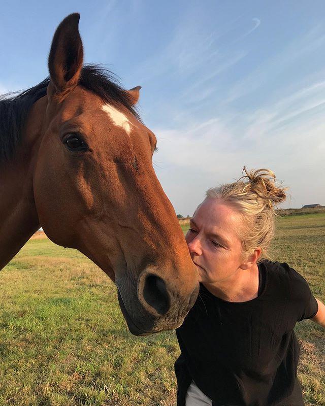 Q appears happy to have arrived safely in Skåne.⠀ ⠀ #gramsgård #gramsgard #visitskåne #visitösterlen #österlen #visitsweden #simrishamn #balticsea #skåneleden #stfturist #schweden #horse