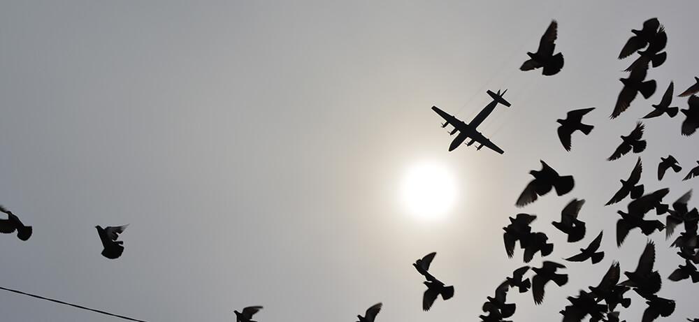 Transavia transformeert naar een non-fragile organisatie -