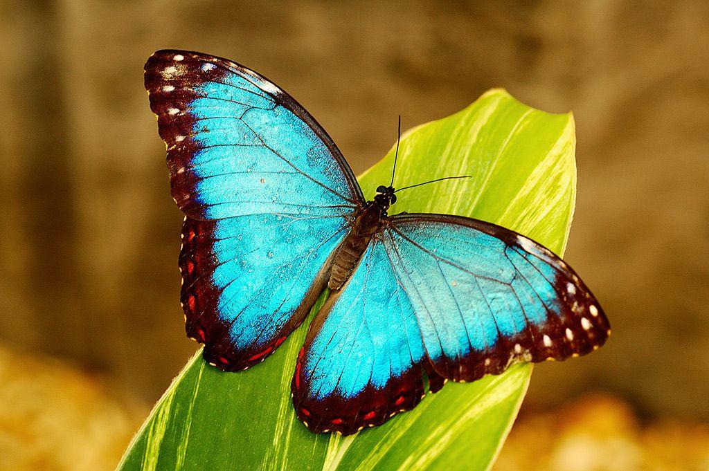 Vlinder.JPEG