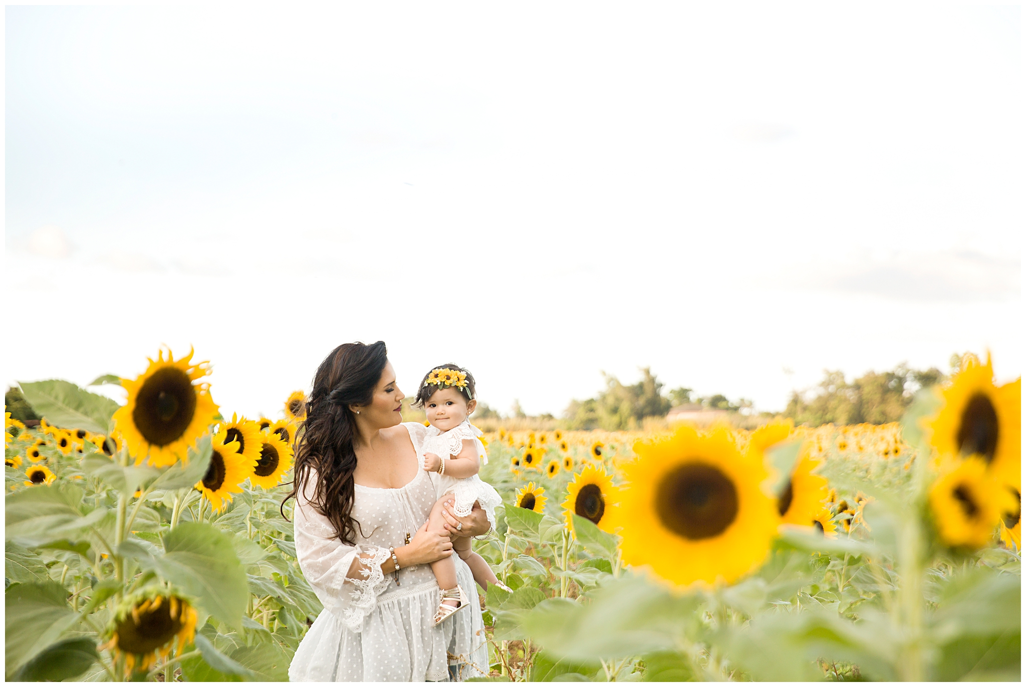 Sunflower field in Miami with Best Family Photographer