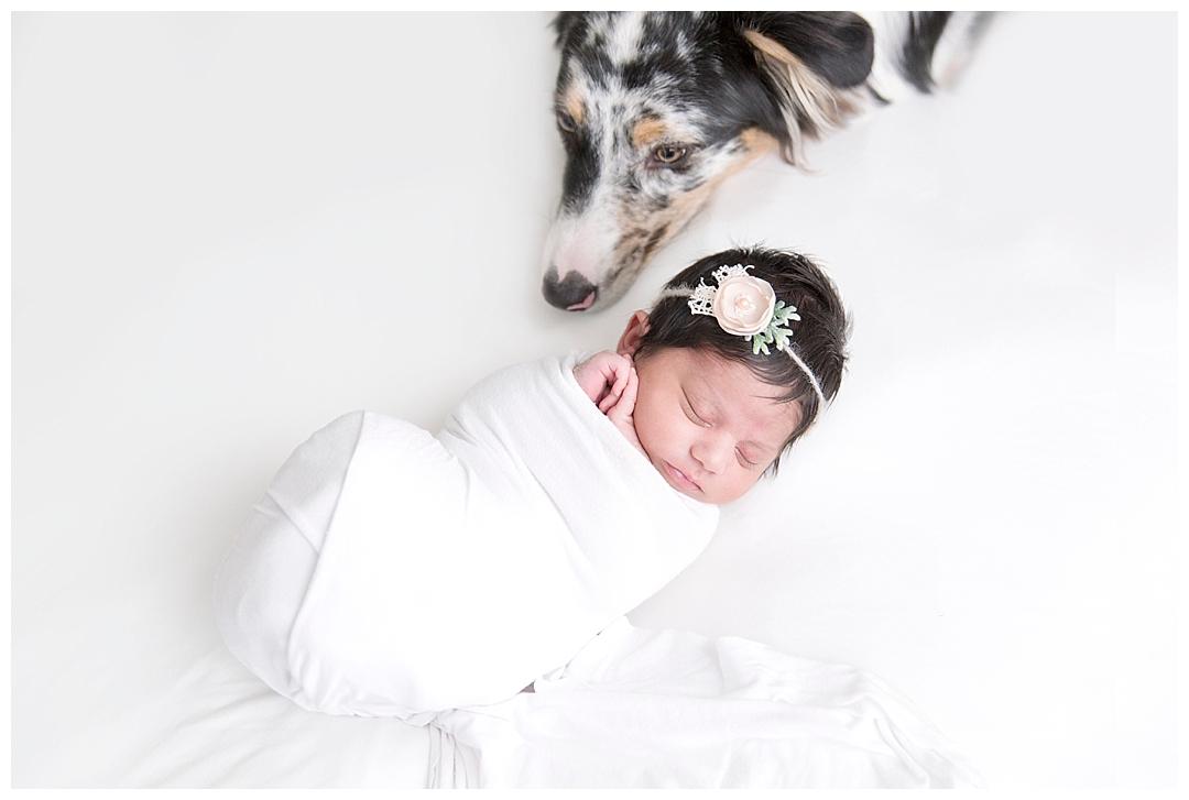 newborn baby and puppy | newborn session in miami fl