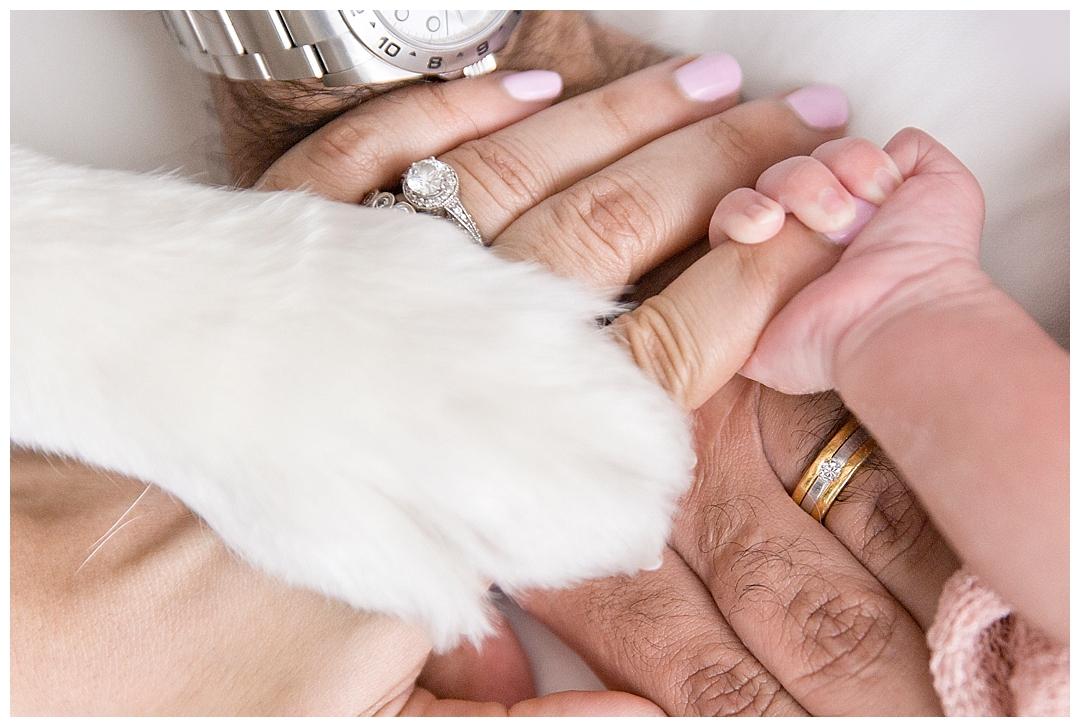 puppy newborn session in miami fl