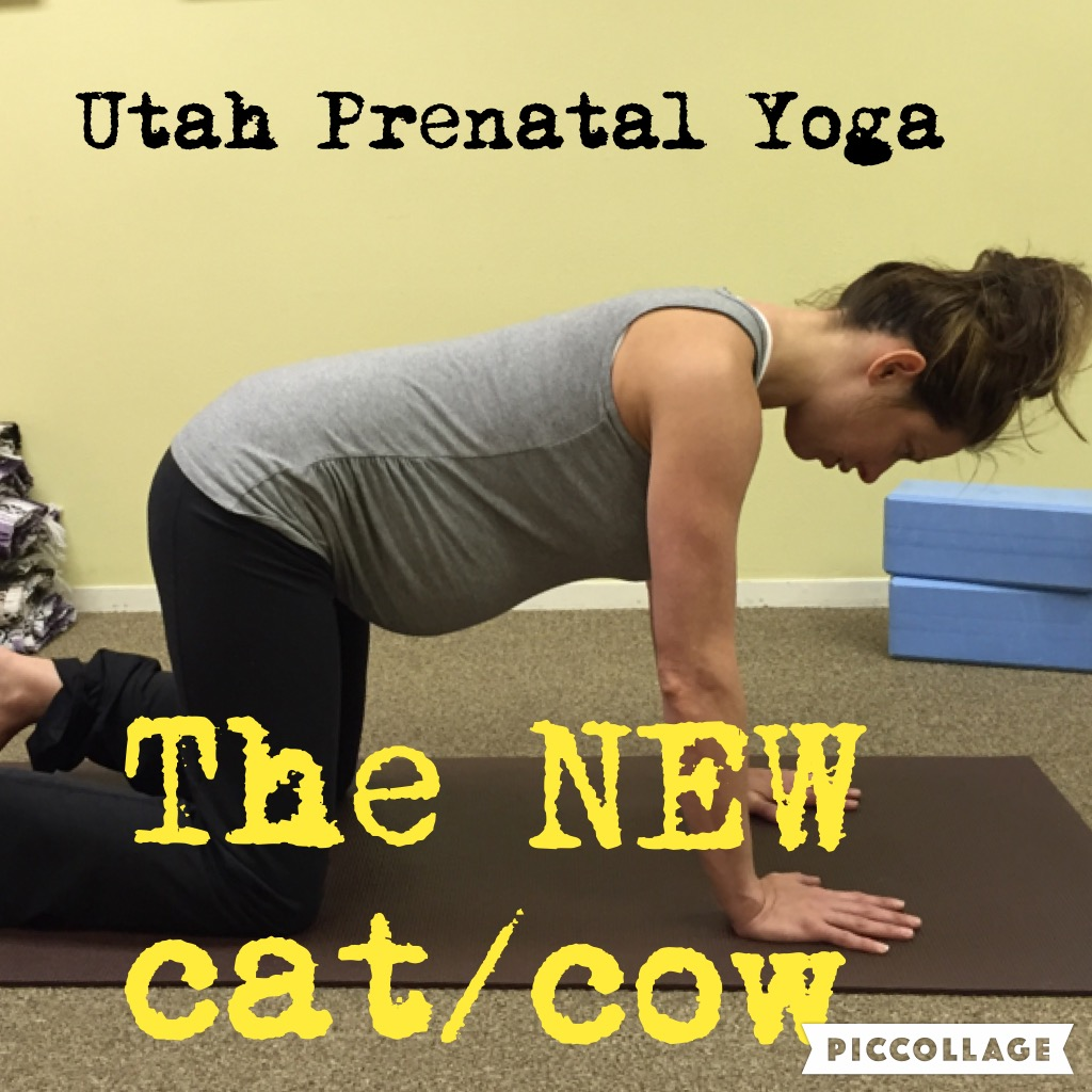 The New Cat Cow Utah Prenatal Yoga