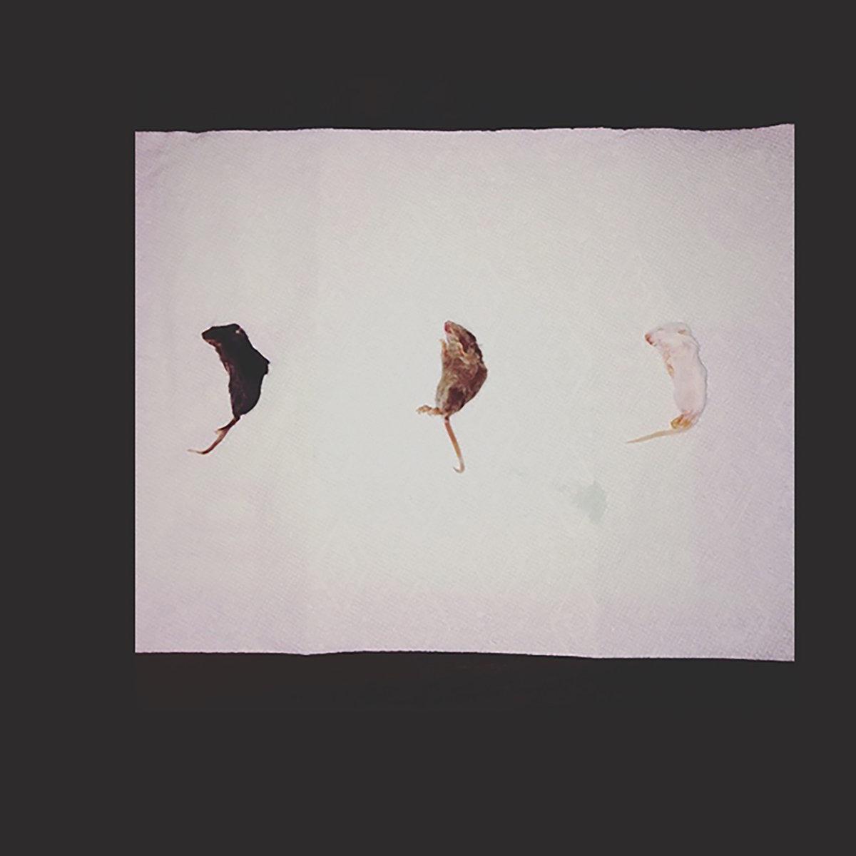 Released: August 6th, 2017 Genres: Garage rock, Math, Surf