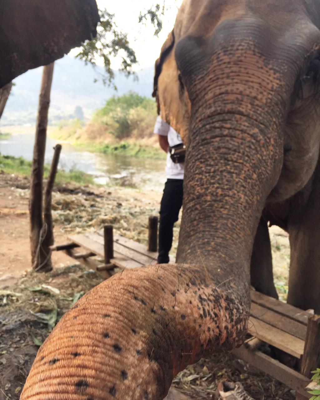 elephant-nature-park.png