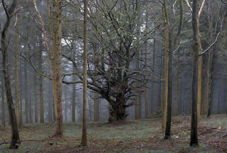 old tree 1.jpg