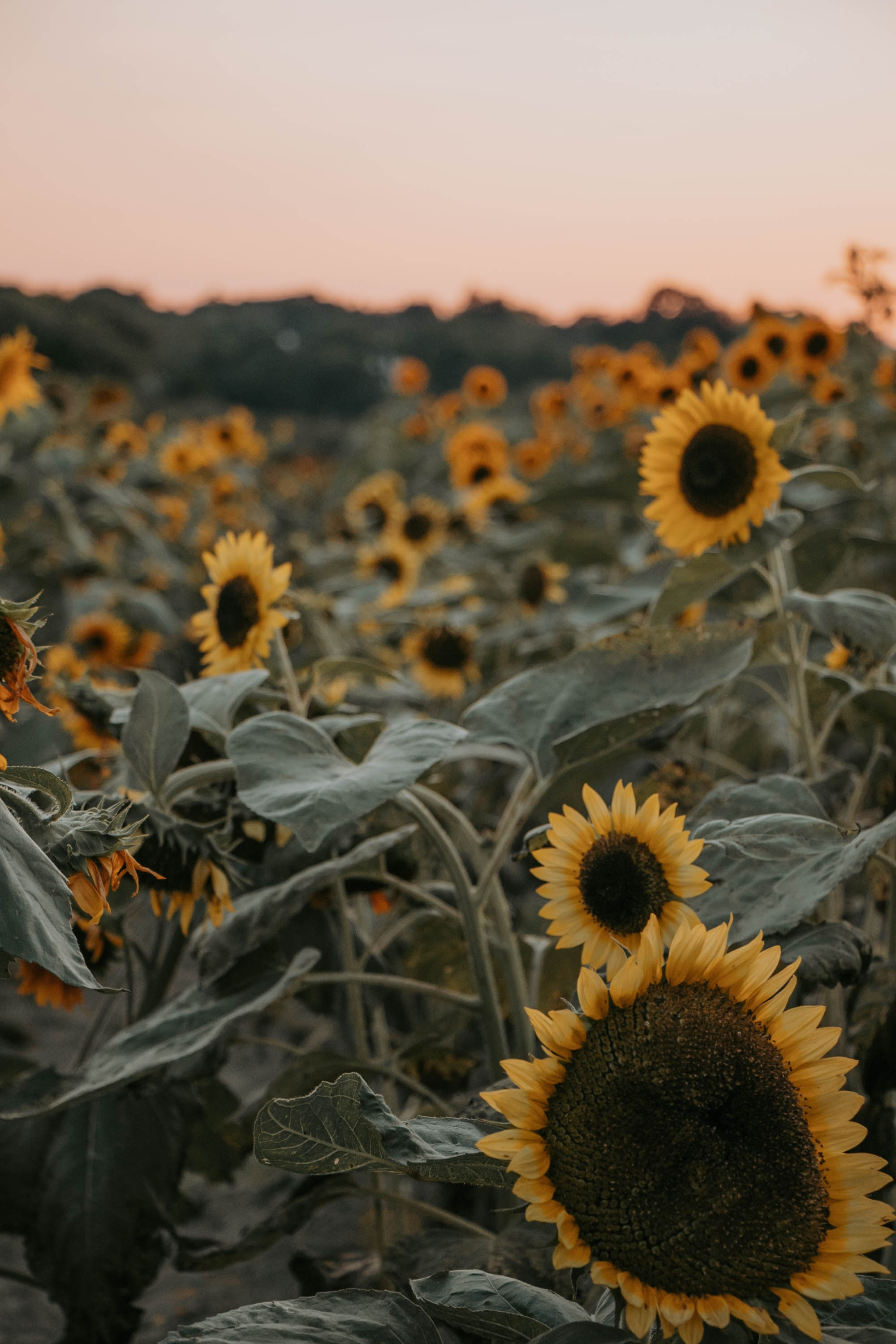 photo by Juliana arruda via unsplash