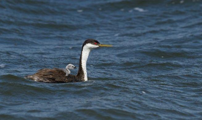 by  Joshua Galicki  via birdwatching daily