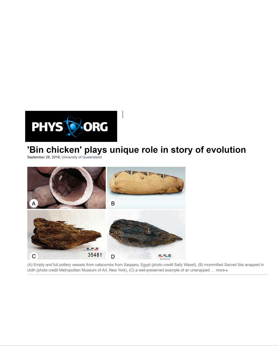 phys org ibis2.JPG