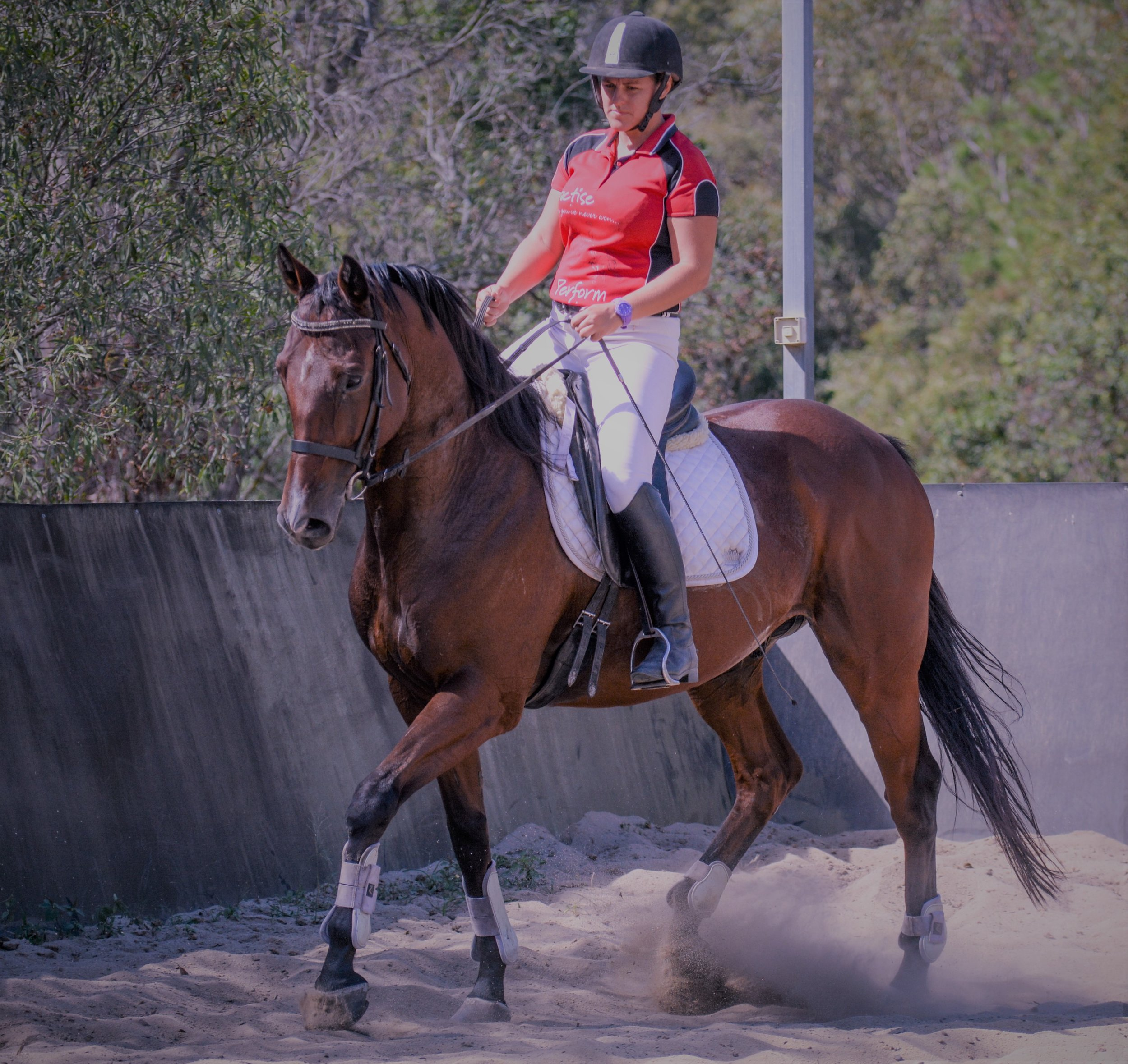 the release of pressure allows your horse to learn