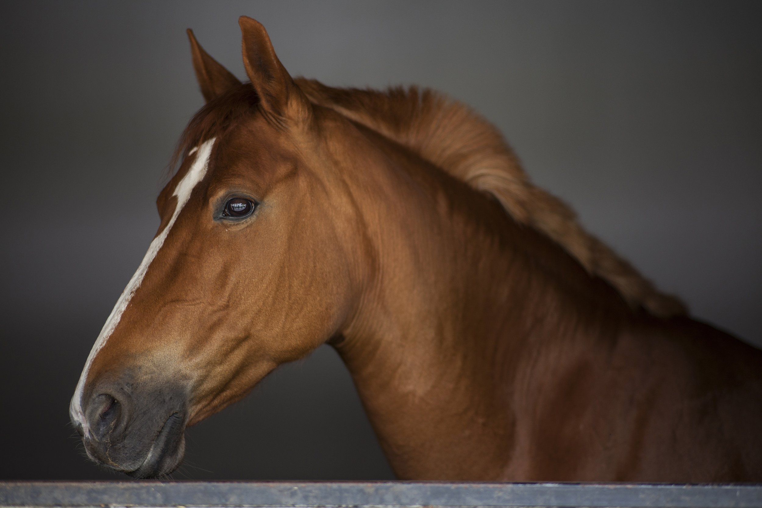 is your horse bomb-proof?