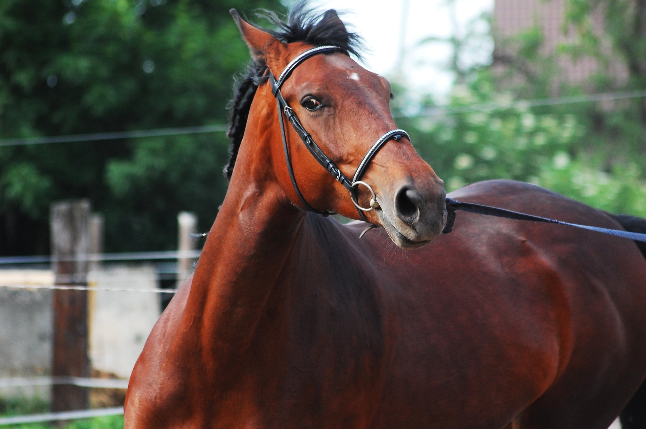 Is your horse evading the aid?
