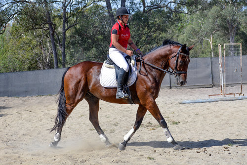 Negative Reinforcement in horse training