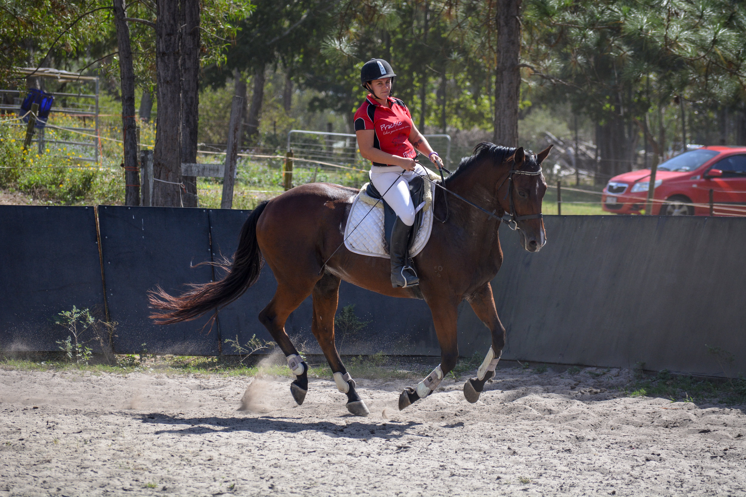 Equestrian Movement Help I M Afraid To Canter