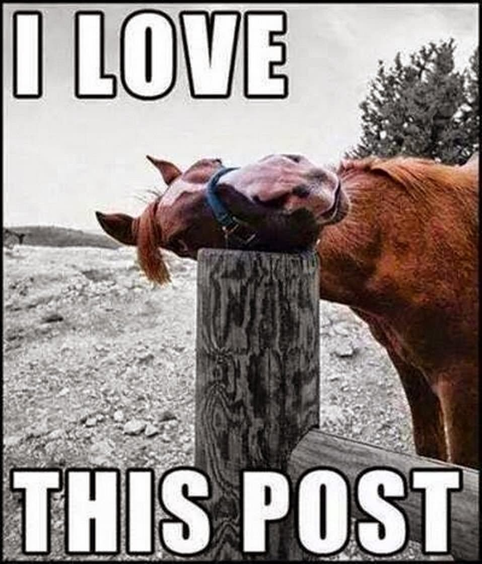 I-Love-This-Post-Funny-Horse-Meme-Picture.jpg