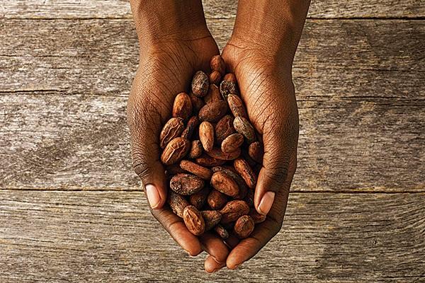 shop - non gmo, responsibly sourced unrefined cocoa butter