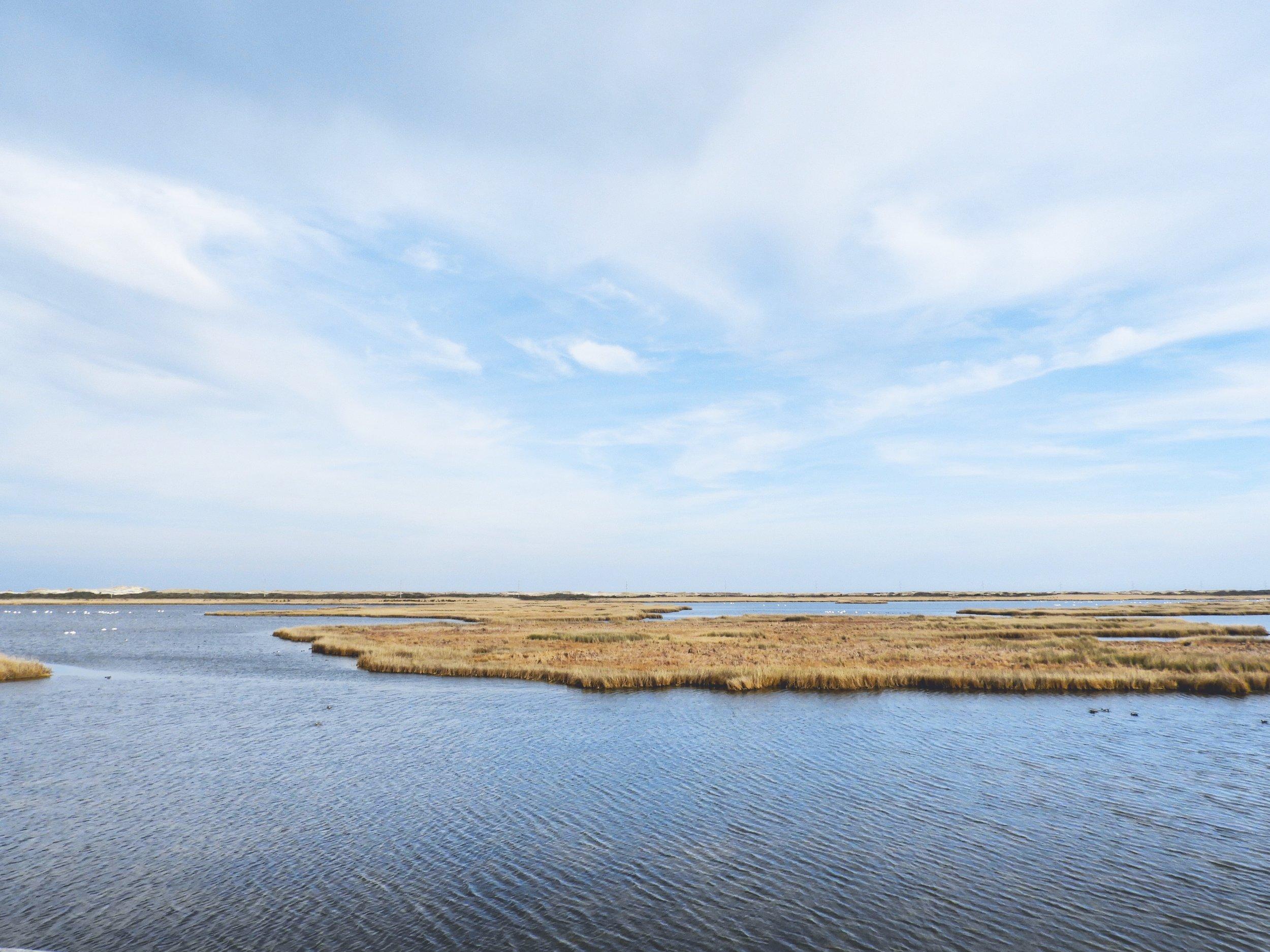 Marsh at Bodie Island