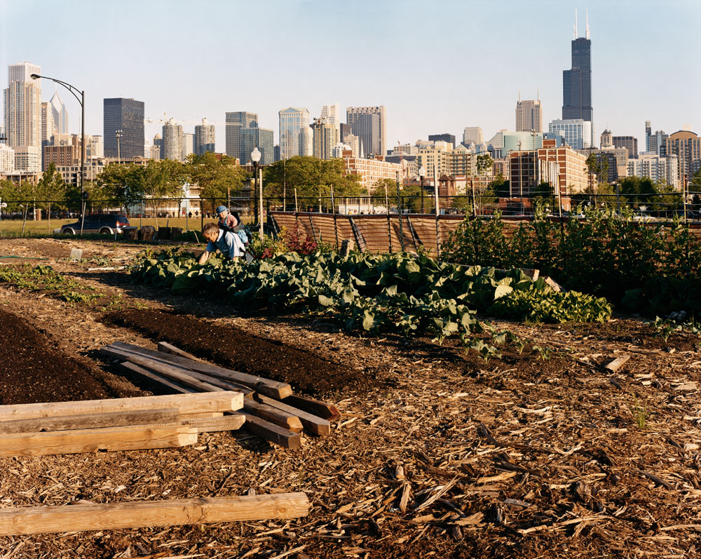 City Farm, Clybourn and Cleveland Avenues, Chicago, May 2005.