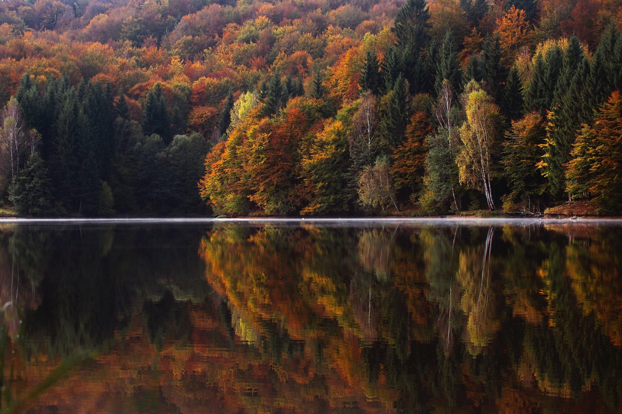 autumnal-colorful-conifer-217120.jpg
