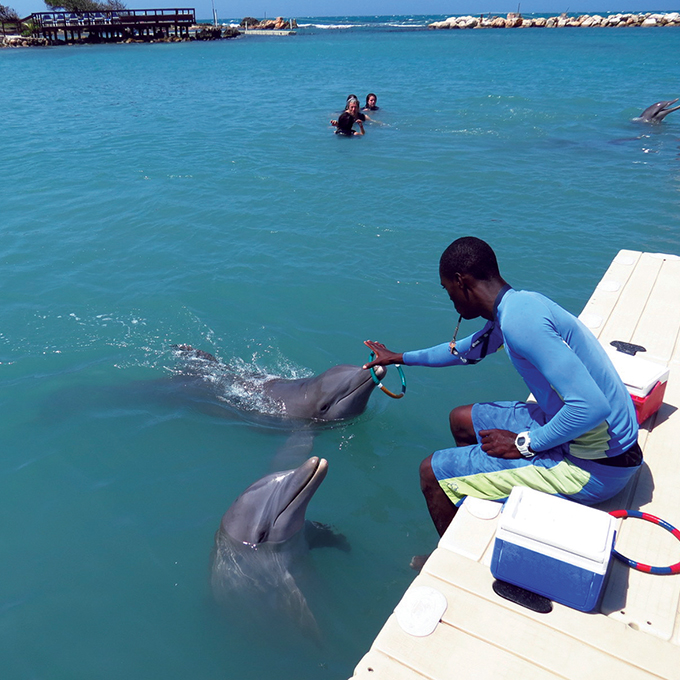 Dolphin Cove - kartfamily 2.0.jpg