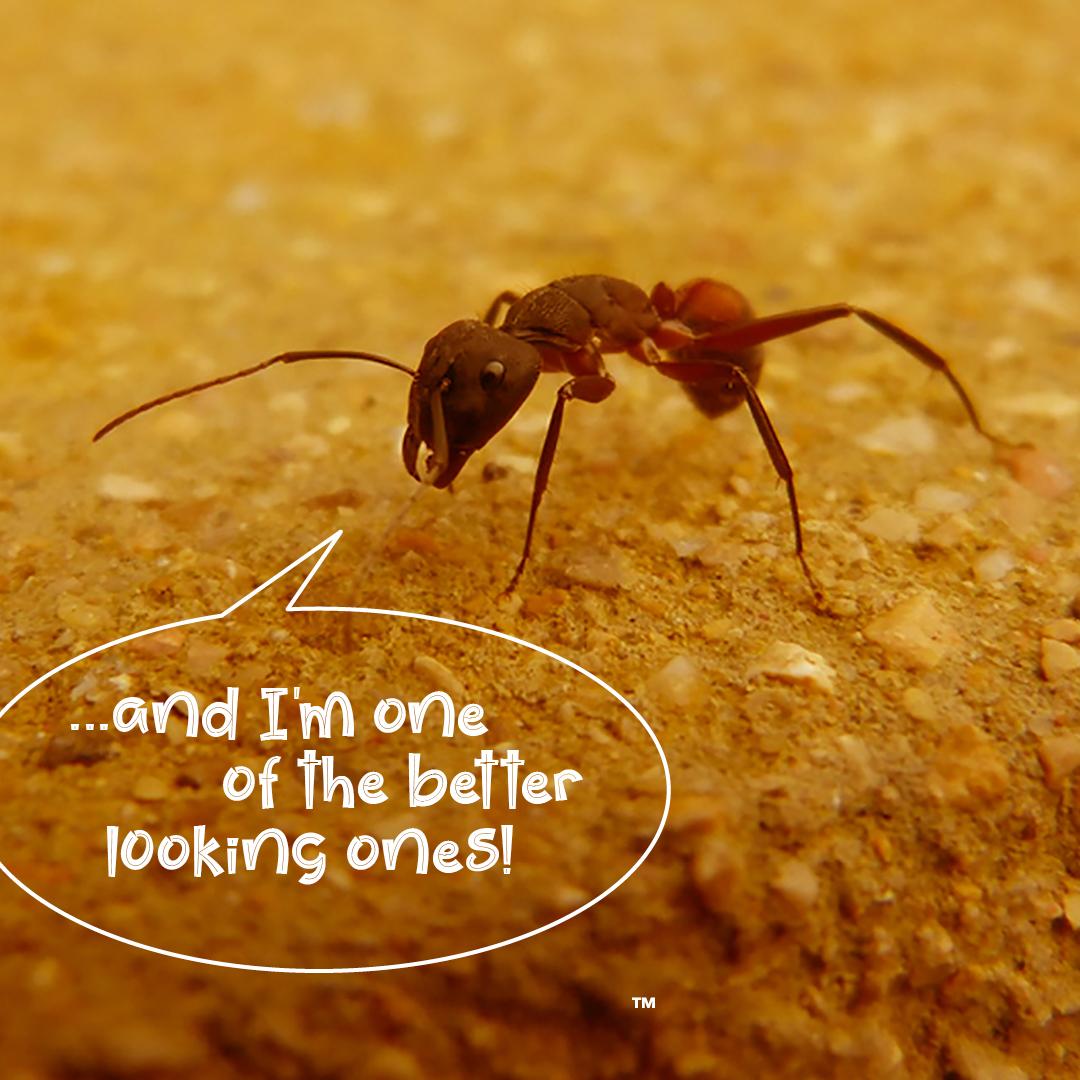 Wiggly Bugs Header 2 .jpg