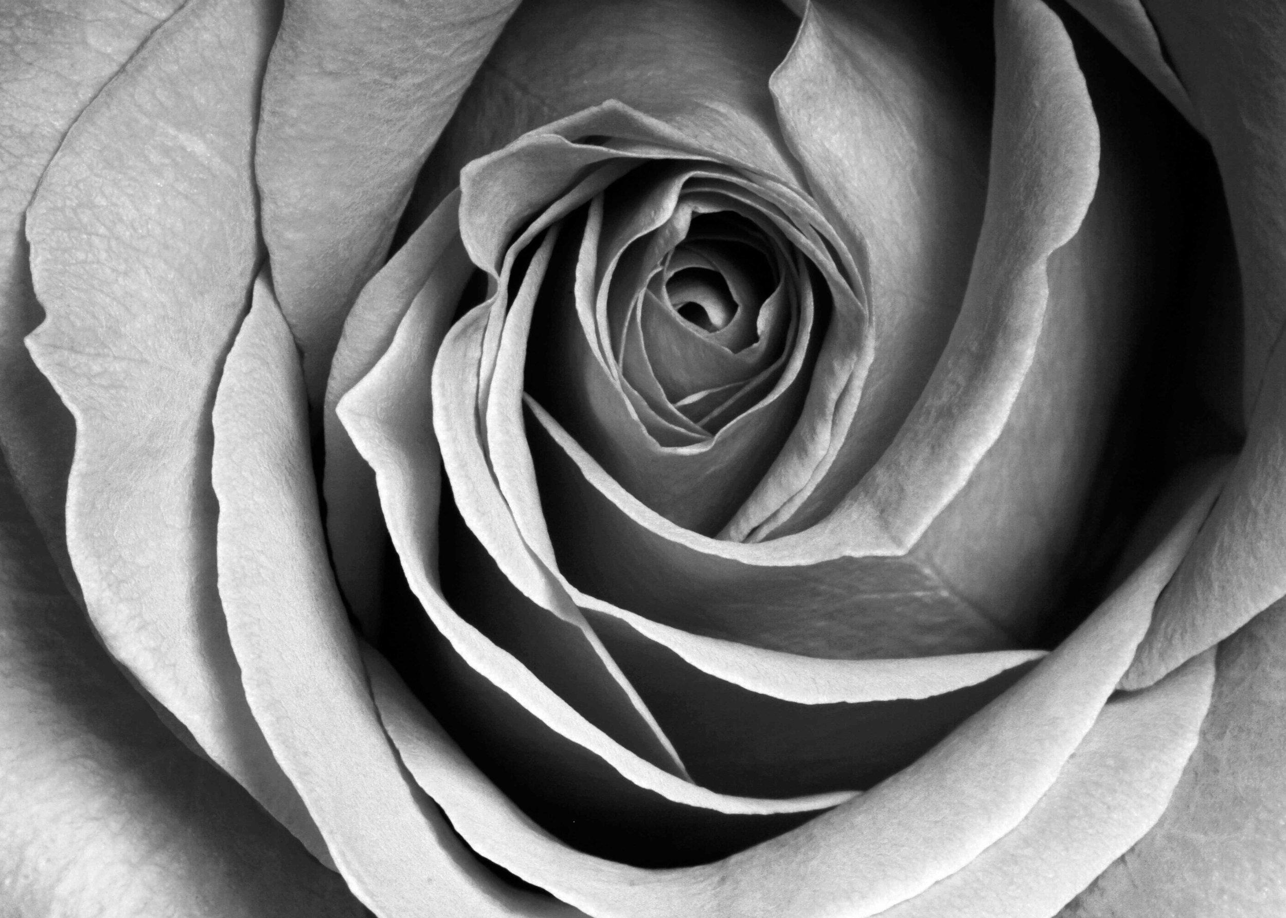 Flowers_0058-Affinity BW 5x7.jpg