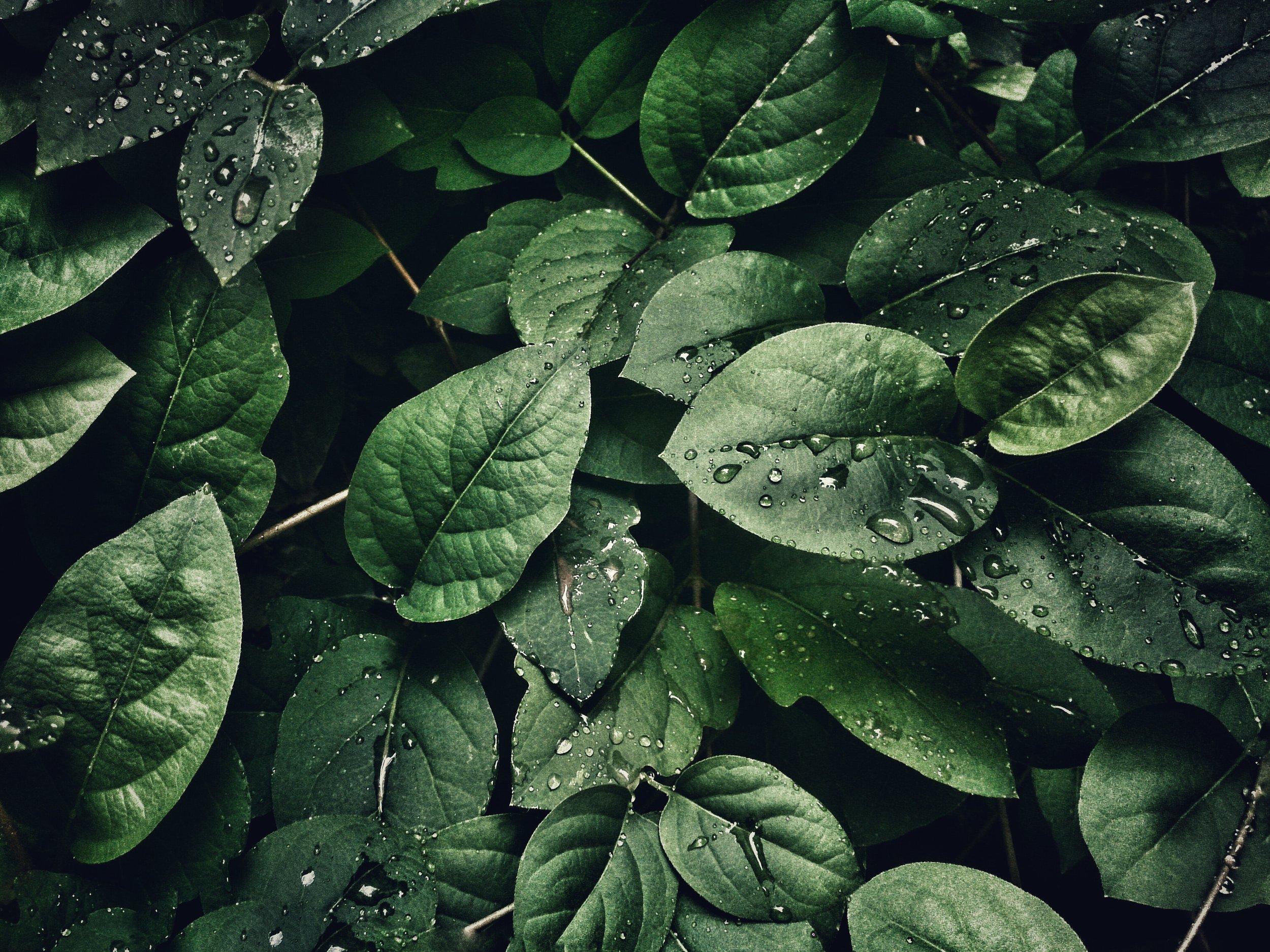 mobilechallenge-close-up-dew-807598.jpg