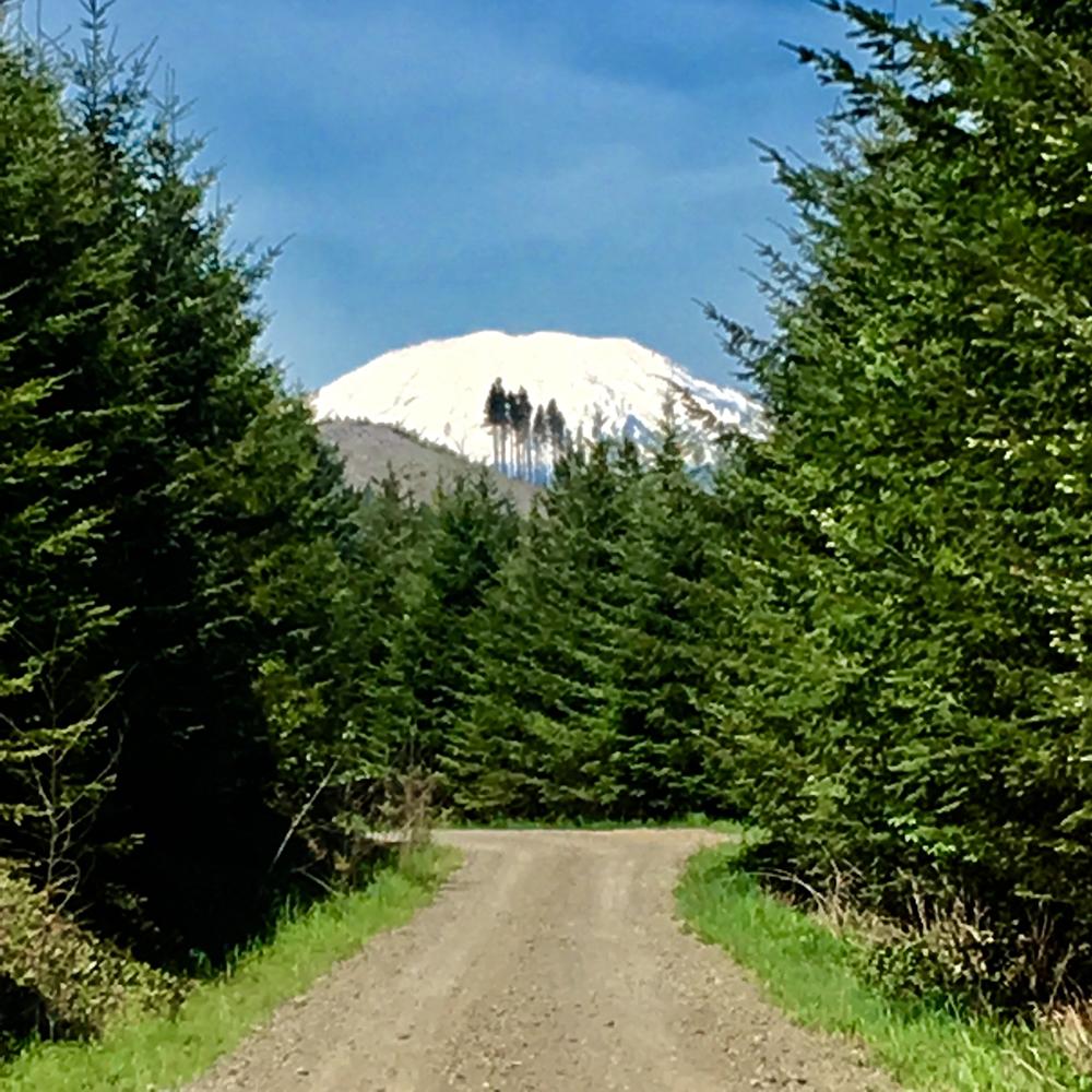 NE-Berry-Rd.,-Alpine,-WA