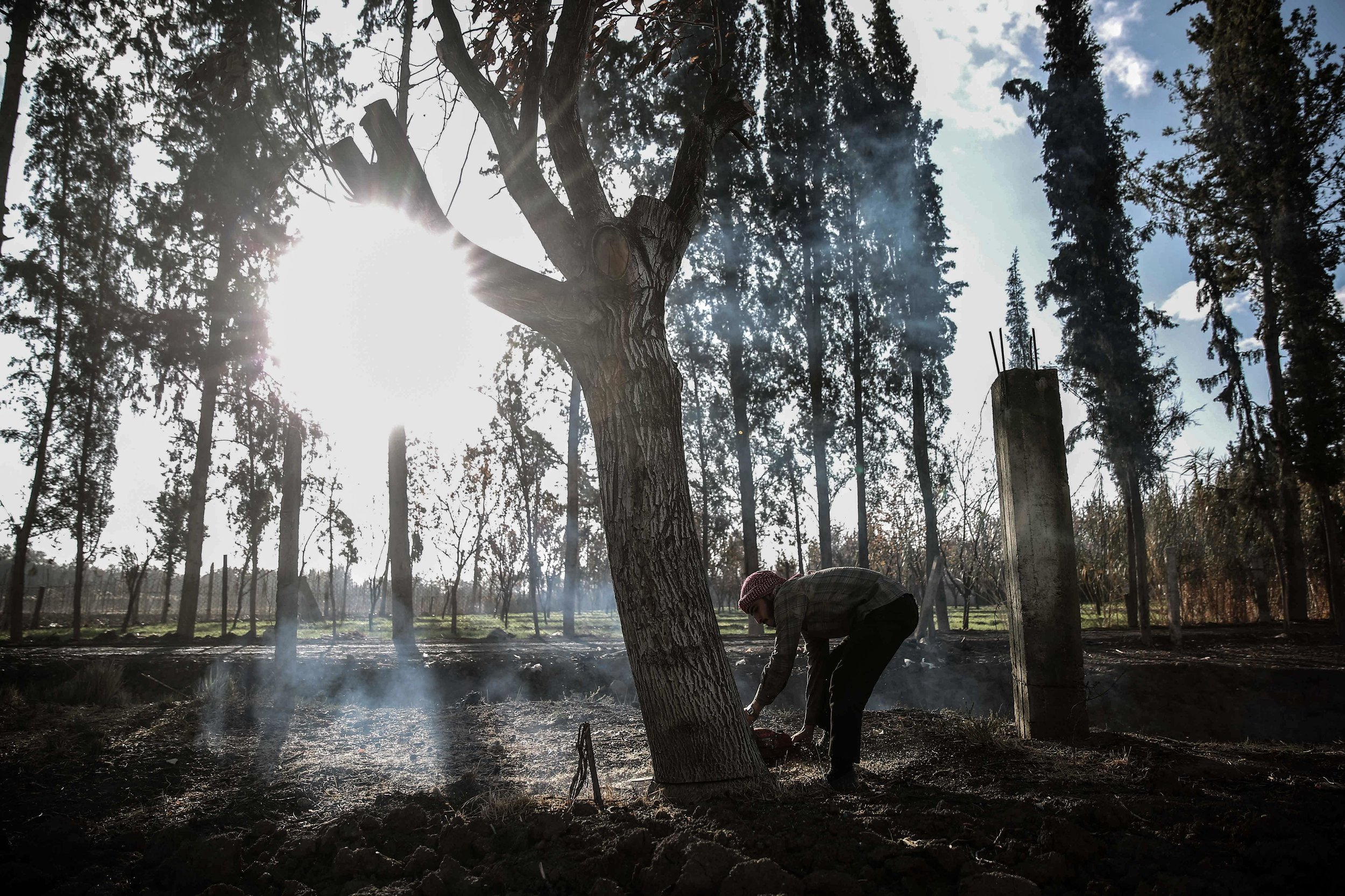 - A man cuts down a tree for firewood used for heating and cooking.
