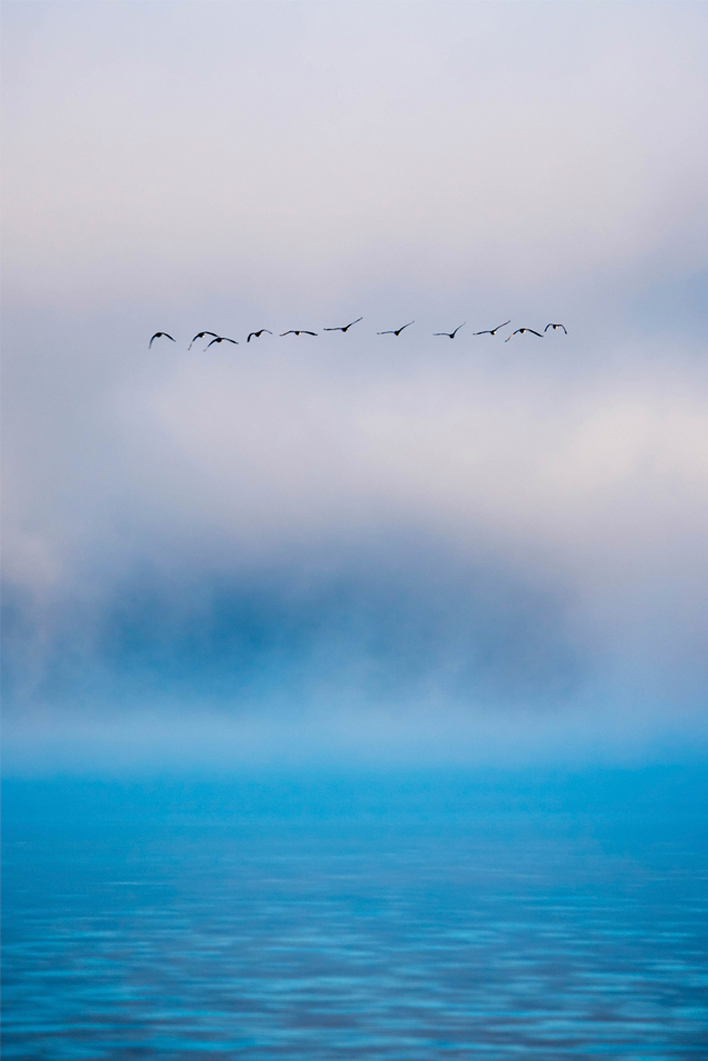 Migration-sm.jpg