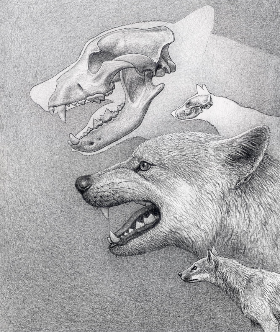 Illustration by Mauricio Anton; used with permission to accompany the paper.