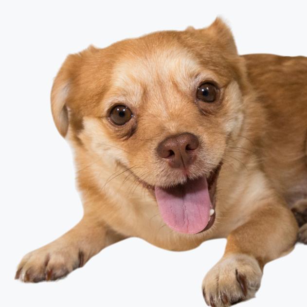 Dog4.png