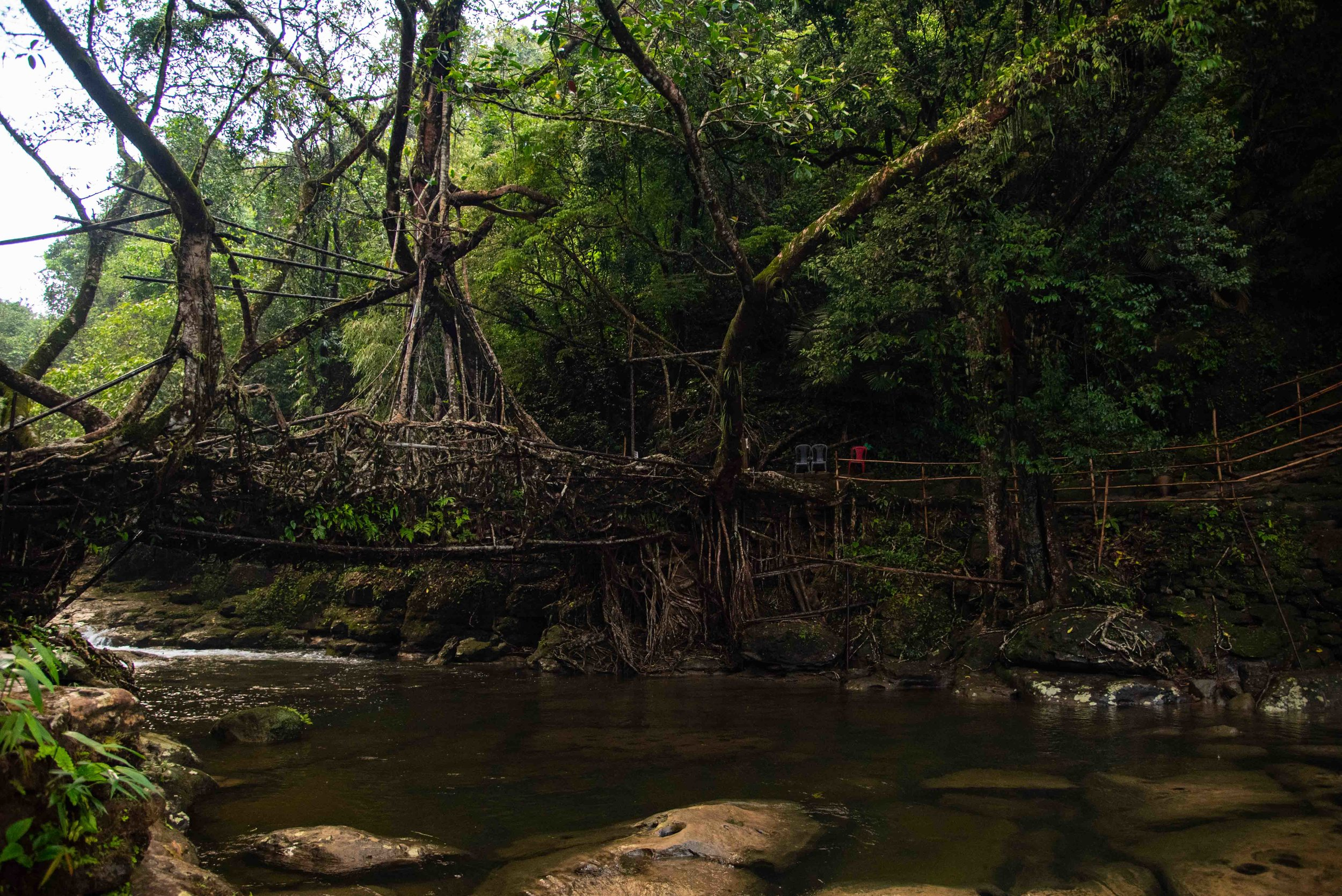 LIVING ROOT BRIDGE AT MAWLYNNONG